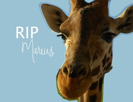rip-marius